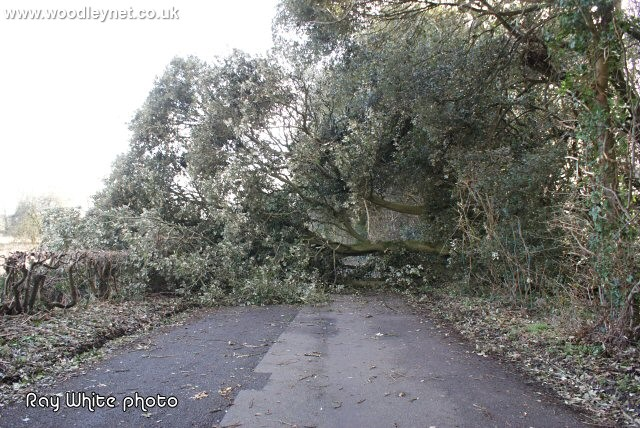 Fallen Tree Lee lane Romsey